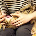 ハミガキを催促する猫