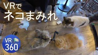 VR 360 japanese cat cafe 猫たちに囲まれたい人どうぞ