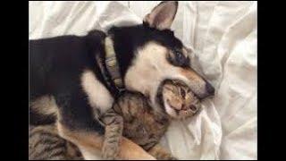 2019「かわいい猫」 笑わないようにしようとしてください – 最も面白い猫の映画