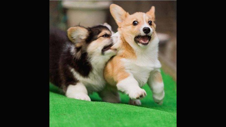 「絶対に笑える犬, 猫」最高におもしろい犬, 猫のハプニング, 失敗動画集・かわいい犬, かわいい猫