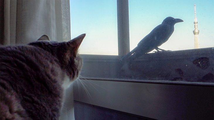 ウキャキャなネコ達と余裕のカラス – Cats vs Crow –
