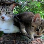 野良猫の親子を観察する