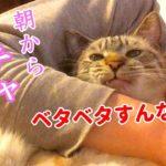 朝起きたら隣に猫が寝てたので好き放題やっちゃいました