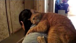 「猫と飼い主の感動の再会」戦地から帰ってきた飼い主や長く離れてた飼い主に大喜びする猫たち2016 HD集