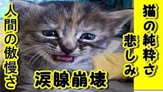 【 感動 泣ける話 猫 】猫の純粋さと悲しみ -人間の傲慢さそして遅すぎる 後悔と苦しみ飼い主の身勝手 涙腺崩壊 動画 里親・招き猫ちゃんねる
