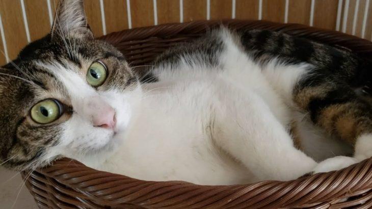 【癒しの猫たち 001】 このダラダラ感がとってもカワイイ!