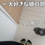 大好きな娘の部屋に入ってテンションが上がる猫