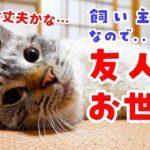 飼い主の旅行中、猫初心者の友人が猫のお世話をしてみた結果…