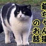 【猫 泣ける話】お爺ちゃん猫に助けられた話『もう私大丈夫だからね』(猫 感動 泣ける話 保護 涙腺崩壊 感涙 動物 動画 里親)招き猫ちゃんねる