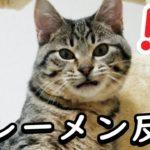 【衝撃】急に猫がタワーの上でフレーメン反応をする瞬間が面白すぎるw
