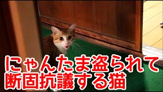 去勢後に断固抗議する猫。にゃんたま盗られてショックなようである。【猫おもしろかわいい】