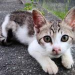 駐車場で出会った野良子猫がカワイイ