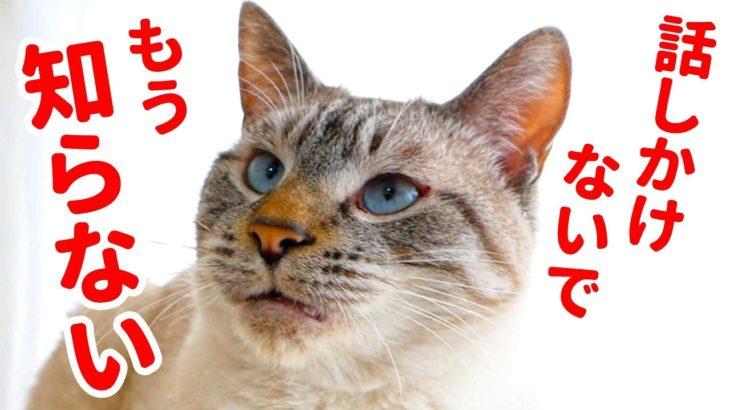 【後悔】甘えん坊猫に意地悪したら拗ねられちゃいました…