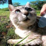 公園の野良猫をねこじゃすりでナデナデしたらゴロンゴロン至福の表情を見せてくれた