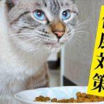 猫に長生きしてほしいのでご飯を工夫してみました【キャットフードのローテーション】