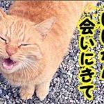 【猫 泣ける話】オバケでもいいから 時々会いにきてね・招き猫ちゃんねる