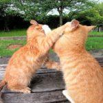 公園のベンチにいた子猫の兄弟がカワイイ