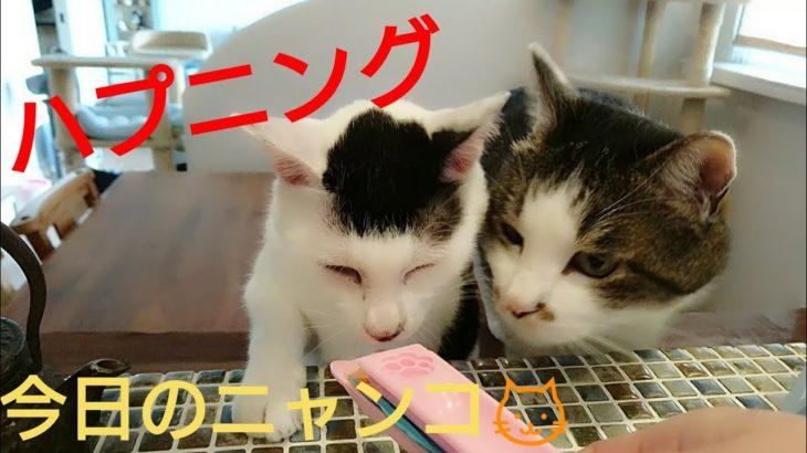 猫ハプニング!【今日のニャンコ】その23