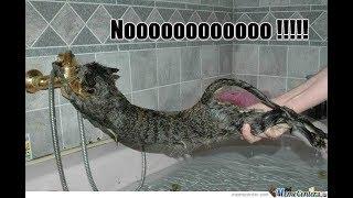 「面白い動物」あり得ないことをする犬, 猫・おもしろ犬, 猫のハプニング, 失敗集 426