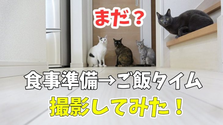 ご飯が楽しみすぎる猫4匹の様子と食事風景!