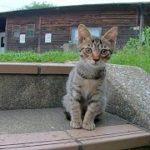 公園で超カワイイ子猫の兄弟と戯れてきた