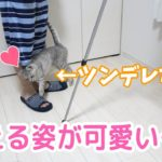 ツンデレな猫が全力で甘える姿がかわいい…!