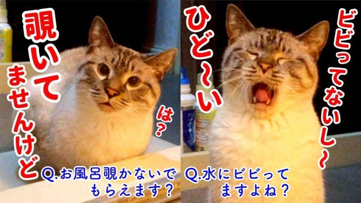 【しゃべる猫】風呂を覗きにきた猫の言い訳が饒舌すぎる件
