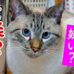 【検証】猫は音楽が嫌いって本当?「ねこのための音楽」を聴かせてみた結果…
