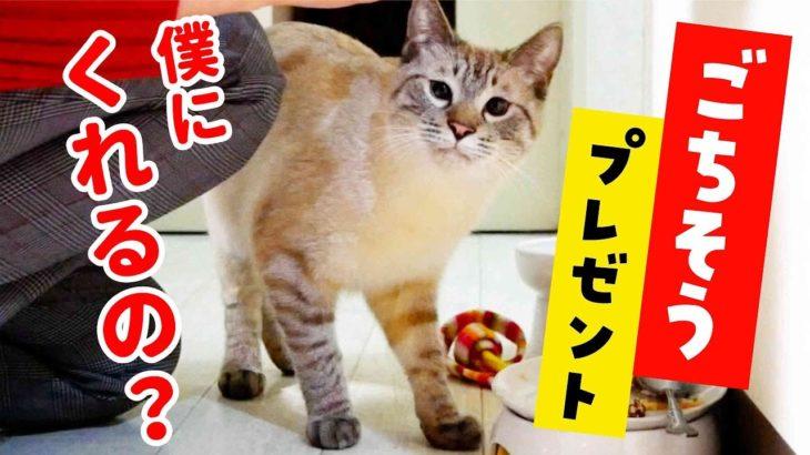 飼い主の友人が猫のデュフィにごちそうを持ってきてくれました