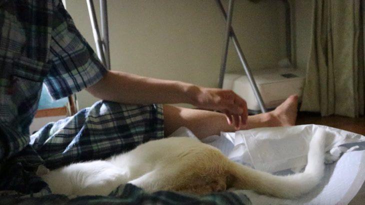 下半身麻痺の猫の排尿のさせ方 (ネコ田家流)