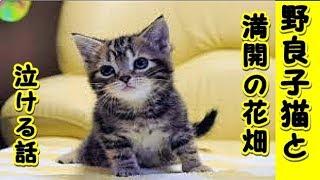 【猫 泣ける話】亡くなった野良の子猫と満開の紫のお花畑(猫 感動 泣ける話 保護 涙腺崩壊 感涙 動物 動画 里親)招き猫ちゃんねる