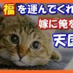 【感動する話泣ける話】俺に福を招く猫!ある日嫁に俺を託し 天国へ(涙)ありがとう!!