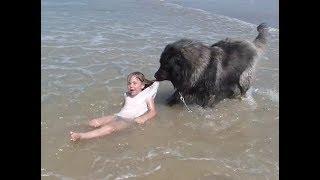 「面白い動物」あり得ないことをする犬, 猫・おもしろ犬, 猫のハプニング, 失敗集 #362