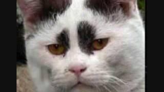 極猫★ゴクネコ