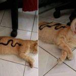 「面白い動物」あり得ないことをする犬, 猫・おもしろ犬, 猫のハプニング, 失敗集 #445