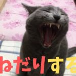 【カワイイ】ニャンニャン寄ってくる猫