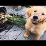 「絶対笑う2019」最高におもしろ犬,猫,動物のハプニング, 失敗画像集 #13