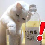 炭酸水を見るとついつい手を突っ込んじゃう猫!