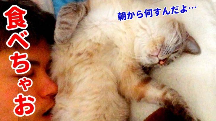 目覚めたら目の前にモフモフの猫がいたのでハムハムしちゃいました…