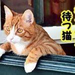 【感動 涙腺崩壊 猫】帰らないあの世の祖父母をいつまでも玄関で待ってる猫・招き猫ちゃんねる