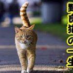 【感動 泣ける話 猫 】不幸な野良猫ばかりでは ありません地域の人に愛され幸せな猫生を終えた野良猫の話(猫 感動 泣ける話 保護 涙腺崩壊 感涙 動物 動画 里親)招き猫ちゃんねる
