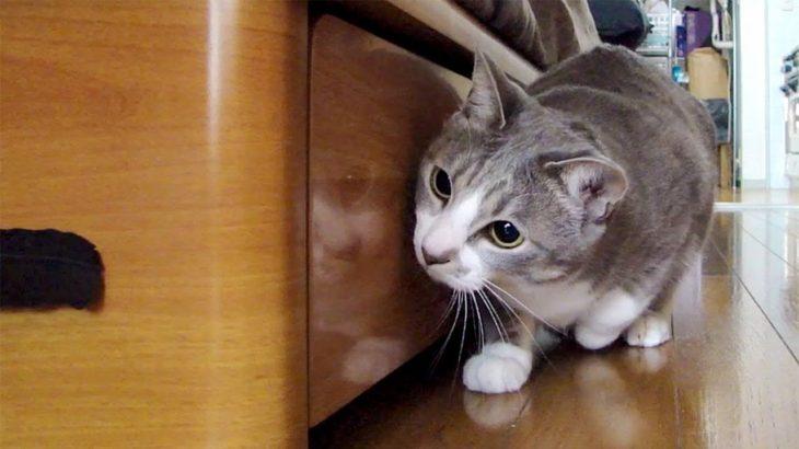 だるまさんが転んにゃ2 – Stalking Cat 2 –