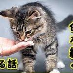 【感動 泣ける話 猫】野良猫が一生懸命に母から子へと命を絆いでいる-美しいなあと思う話!(猫 感動 泣ける話 保護 涙腺崩壊 感涙 動物 動画 里親)招き猫ちゃんねる