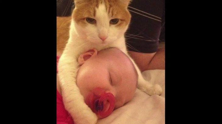 飼い主と赤ちゃんを必死で守る猫・犬化した猫たちがかわいすぎる