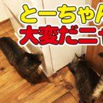 猫とスプーンでキャッチボールをしていたらプチハプニングが…w