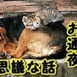 【猫 あの世 泣ける話】猫のお通夜 玄関開けたら 15~20匹くらい近所の 猫が集まって うちの死んだ犬に お別れする話【不思議な話 猫 犬】 動画 招き猫ちゃんねる