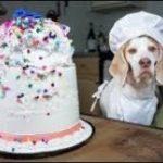 2019「絶対笑う」最高におもしろ犬,猫,動物のハプニング, 失敗画像集 #470