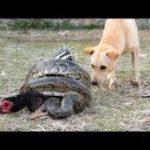 「面白い動物」あり得ないことをする犬, 猫・おもしろ犬, 猫のハプニング, 失敗集 #437