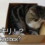 ドッキリな箱とねこ2。-Pranked box and Maru.-