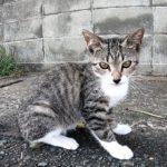 道路脇で遊ぶ子猫がカワイイ
